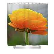 Golden Ranunculus Shower Curtain
