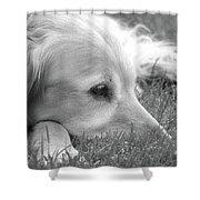Golden Retriever Dog In The Cool Grass Monochrome Shower Curtain