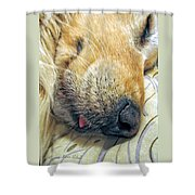 Golden Retriever Dog Little Tongue Shower Curtain by Jennie Marie Schell