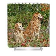 Golden Retriever Dogs In Autumn Shower Curtain