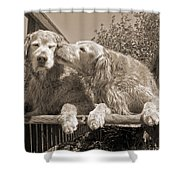 Golden Retriever Dogs The Kiss Sepia Shower Curtain