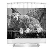 Golden Retrievers The Kiss Black And White Shower Curtain by Jennie Marie Schell