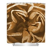 Golden Rose Shower Curtain