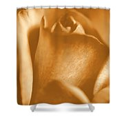 Golden Rose Bud Shower Curtain