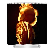 Golden Roses 4 Shower Curtain