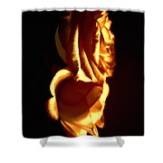 Golden Roses 6 Shower Curtain