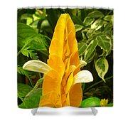 Amazing Golden Shrimp Plant  Shower Curtain