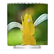 Golden Shrimp Plant Shower Curtain