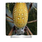 Golden Silk Spider 1 Shower Curtain