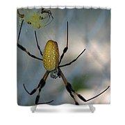 Golden Silk Spider 2 Shower Curtain