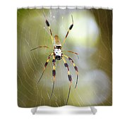Golden Silk Spider Shower Curtain