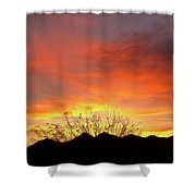 Unvieling Shower Curtain