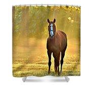 Golden Spirit 1 Shower Curtain