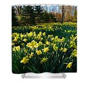 Golden Spring Carpet Shower Curtain