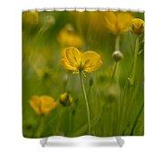 Golden Summer Buttercup 3 Shower Curtain