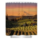 Golden Sunset Over Hood River Pear Orchard Shower Curtain