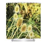 Golden Thistles Sextet Shower Curtain