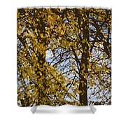 Golden Tree 2 Shower Curtain