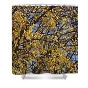 Golden Tree 3 Shower Curtain