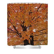 Golden Tree Shower Curtain