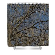 Golden Treetop Shower Curtain