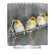 Golden Trio Shower Curtain