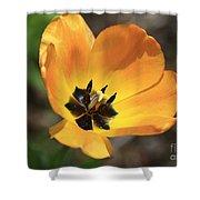 Golden Tulip Petals Shower Curtain