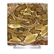 Golden Viper Shower Curtain