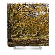 Golden Walnut Orchard II Shower Curtain