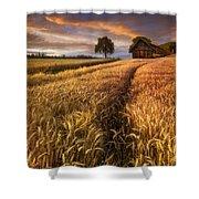 Golden Waves Of Grain Shower Curtain