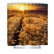 Golden Wheat Dreamscape Shower Curtain