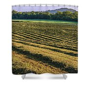 Golden Windrows Shower Curtain
