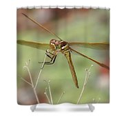 Golden-winged Skimmer Shower Curtain