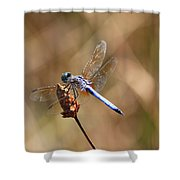 Golden Wings Shower Curtain