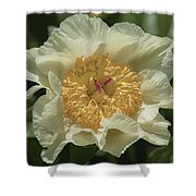 Golden Wings Peony Shower Curtain
