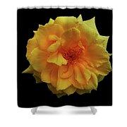 Golden Wonder Shower Curtain
