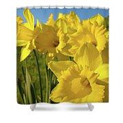 Golden Yellow Daffodil Flower Garden Art Prints Baslee Troutman Shower Curtain