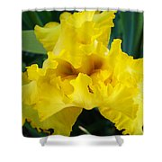 Golden Yellow Iris Flower Garden Irises Flora Art Prints Baslee Troutman Shower Curtain
