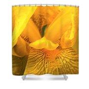 Golden Yellow Iris Shower Curtain