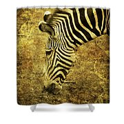 Golden Zebra  Shower Curtain