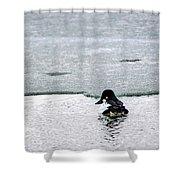 Goldeneye On Ice's Edge Shower Curtain