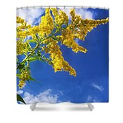 Goldenrod In The Sky Shower Curtain