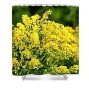 Goldenrod Shower Curtain