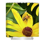 Goldenrod Soldier Beetle Shower Curtain