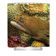 Goldentail Moray Shower Curtain