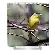 Goldfinch 042914a Shower Curtain