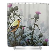 Goldfinch And Thistles Shower Curtain