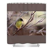 Goldfinch On Branch 032814a Shower Curtain