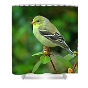 Goldfinch On Green Shower Curtain