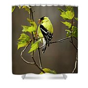 Goldfinch Suspended In Song Shower Curtain